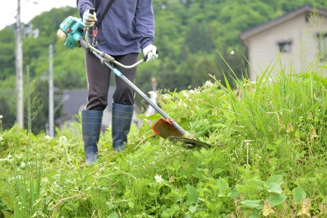 日立市で草刈りに最適な年3回の時期~楽に草刈りを終えるコツまで徹底解説